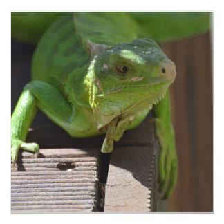 Iguana in the Tropics Invitation