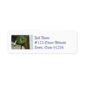 Iguana in the Tropics Return Address Label
