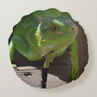 Iguana in the Tropics Round Pillow