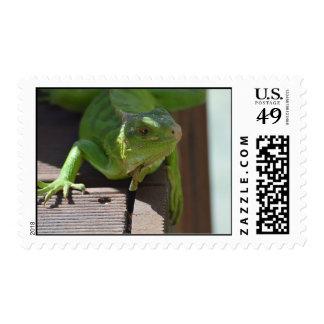 Iguana in the Tropics Stamp