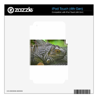 Iguana iPod Touch 4G Decal