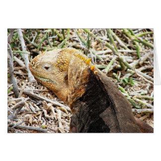Iguana, Isla Seymour, Galapagos Is. Card
