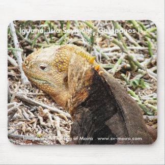 Iguana, Isla Seymour, Galapagos Is. Mouse Pad