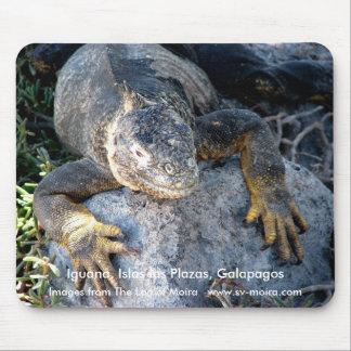 Iguana, Islas las Plazas, Galapagos Mouse Pad