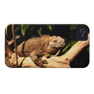 Iguana jamaicana, collei de Cyclura, caja de iPhone 4 Case-Mate Cárcasas