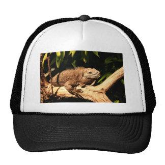 Iguana jamaicana en peligro gorro de camionero