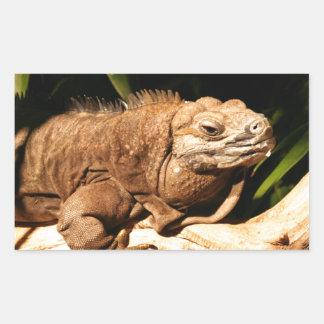 Iguana jamaicana en peligro pegatina rectangular