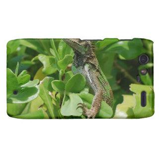 Iguana linda en Bush Droid RAZR Funda