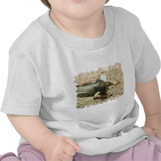 Iguana Lizard Baby T-Shirt