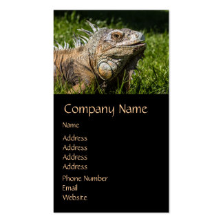 Iguana Lizard Double-Sided Standard Business Cards (Pack Of 100)