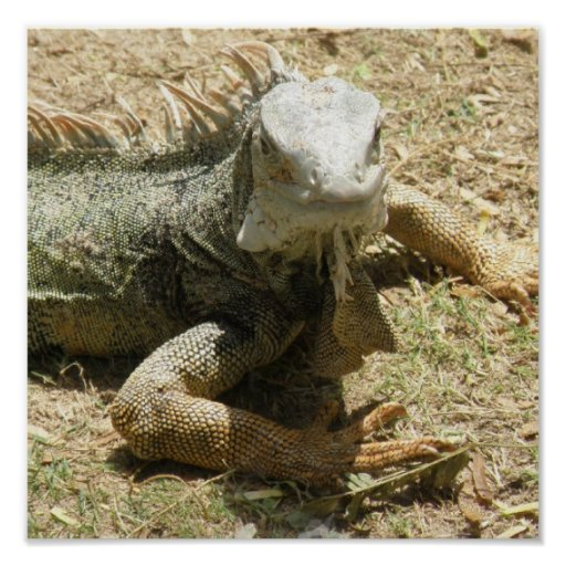 Iguana Lizard Print
