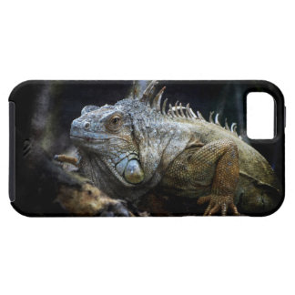 Iguana Lizard Reptile iPhone 5 Cases