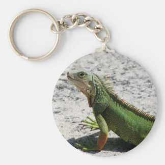 Iguana Llavero Redondo Tipo Pin