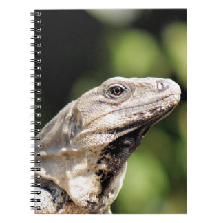 Iguana looking at you spiral note books