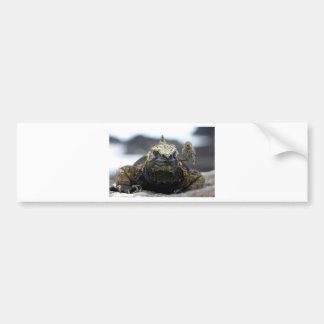 Iguana marina pegatina de parachoque