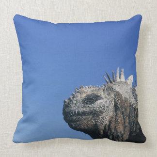 Iguana marina cojines