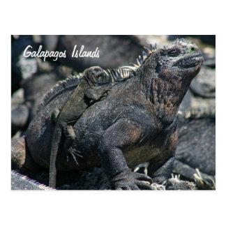 Iguana marina de las Islas Galápagos con el bebé Postal