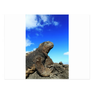 Iguana marina de las Islas Galápagos que toma el s