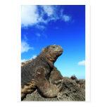Iguana marina de las Islas Galápagos que toma el s Tarjeta Postal