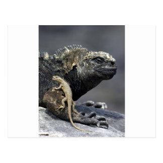 Iguana marina de las Islas Galápagos y lagarto de