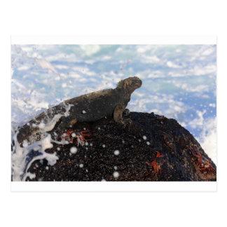 Iguana marina en las islas de las Islas Galápagos
