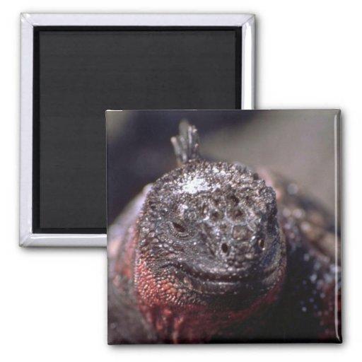 Iguana marina imán de frigorífico