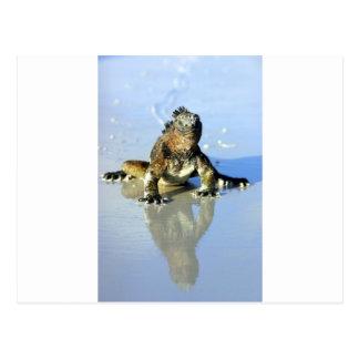 Iguana marina las Islas Galápagos
