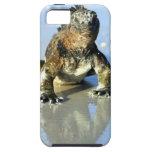Iguana marina las Islas Galápagos iPhone 5 Case-Mate Protector