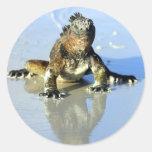 Iguana marina las Islas Galápagos Pegatinas Redondas