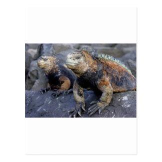 Iguana marina las Islas Galápagos San Cristobal