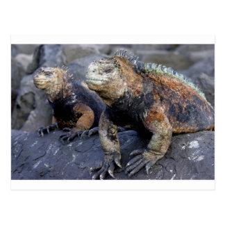 Iguana marina las Islas Galápagos San Cristobal Postales