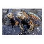 Iguana marina las Islas Galápagos San Cristobal Tarjeta Postal