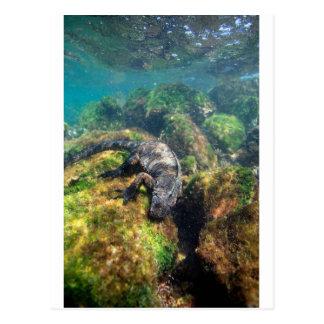 Iguana marina que alimenta las islas de las Islas