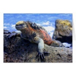 Iguana marina tarjetas