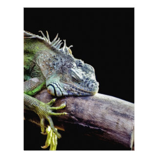 Iguana Plantilla De Membrete