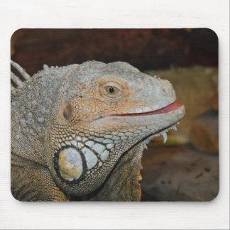 Iguana Mousepad Tapetes De Ratones