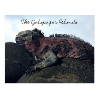 Iguana negra de las islas de las Islas Galápagos Postales