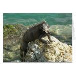 Iguana on the Rocks at St. Thomas Card