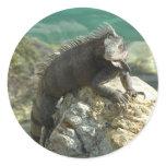 Iguana on the Rocks at St. Thomas Classic Round Sticker