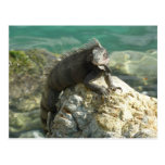 Iguana on the Rocks at St. Thomas Postcard