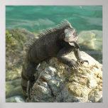 Iguana on the Rocks at St. Thomas Poster