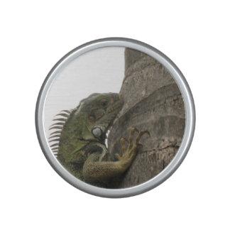 Iguana Speaker