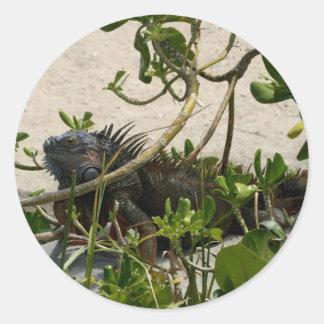 Iguana Pegatinas Redondas