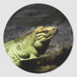 Iguana Pegatina Redonda