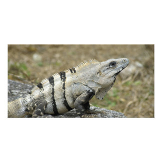 Iguana Perch Card