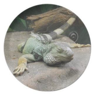 Iguana perezosa plato
