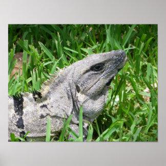 Iguana pet wild lizard animal reptile poster