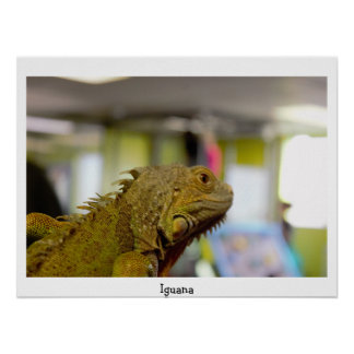 Iguana Photo Poster