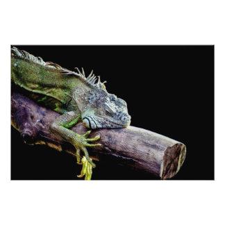 Iguana Photo Art