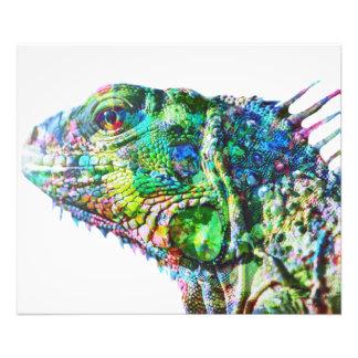 Iguana Photo Print